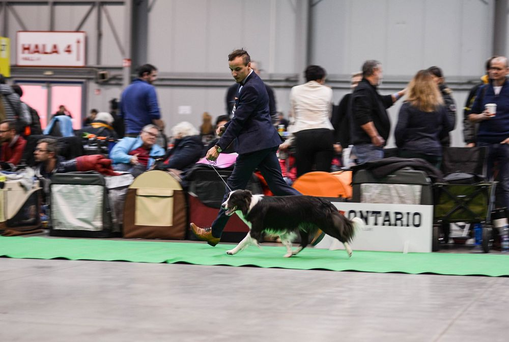 Prague Dog Expo